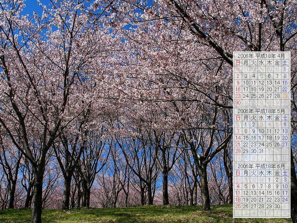 桜(さくら)の風景壁紙写真/2006年春の無料壁紙カレンダー