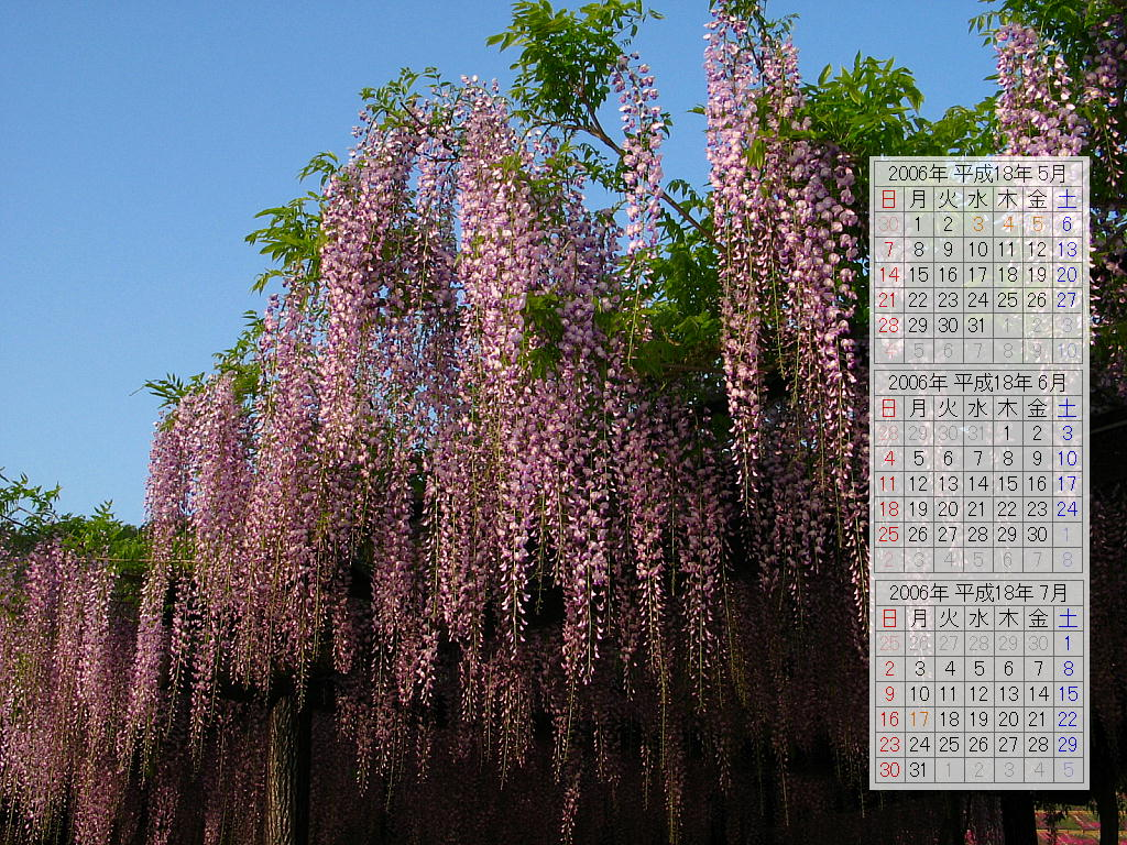 藤(フジ)の花壁紙写真/2006年無料壁紙カレンダー・無料写真素材