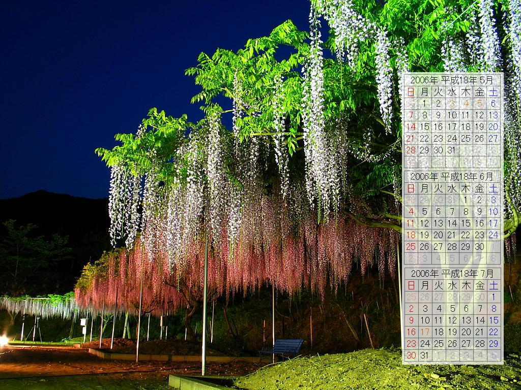 藤(フジ)の花・藤棚ライトアップ壁紙写真/2006年無料壁紙カレンダー・無料写真素材