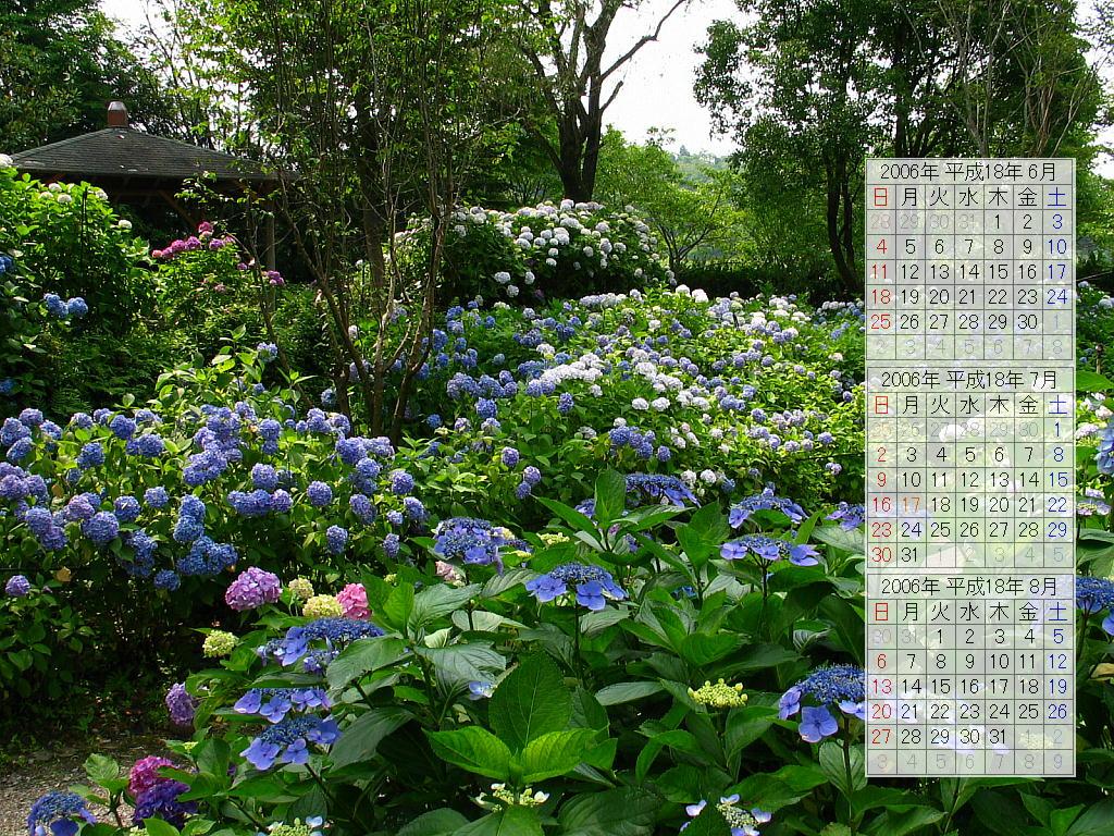 紫陽花(あじさい)園・紫陽花(あじさい)の花の壁紙写真/2006年無料壁紙カレンダー・無料写真素材