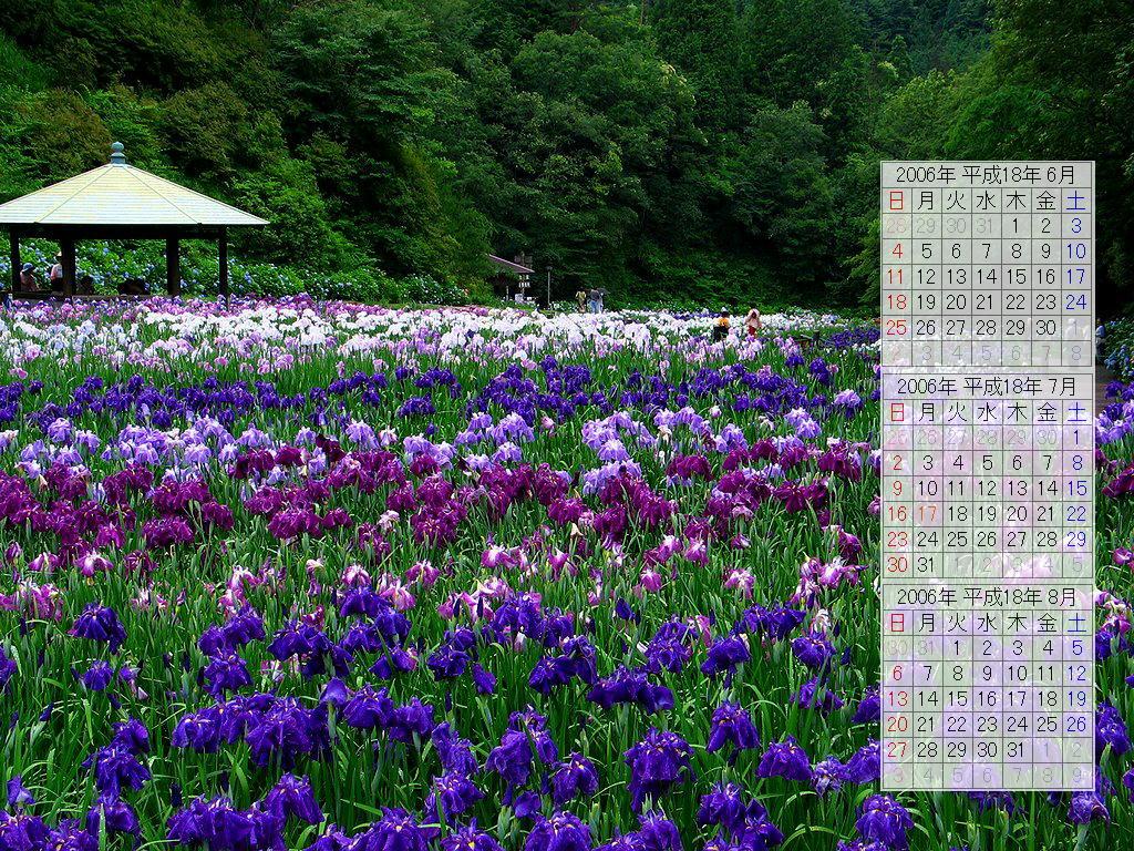 花菖蒲園と花菖蒲の壁紙写真/2006年無料壁紙カレンダー・無料写真素材