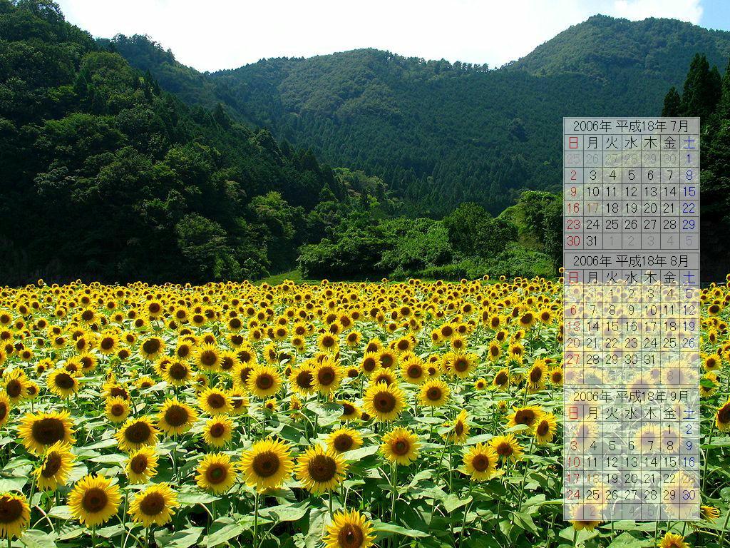 ひまわり畑/夏の壁紙写真/2006年無料壁紙カレンダー・無料写真素材