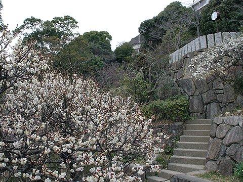 神戸市東灘区・岡本梅林公園