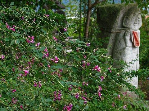 高照寺 秋の七草・萩の花