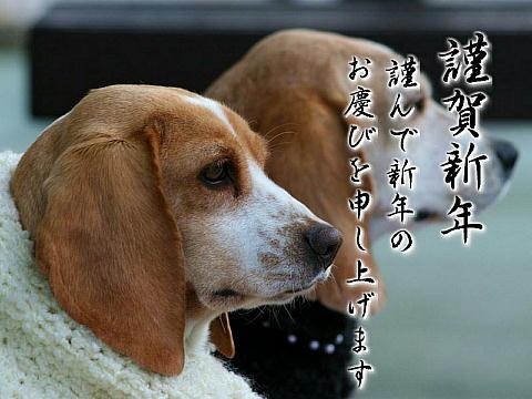 2006年(平成18年・戌年)謹賀新年・新年のご挨拶写真画像