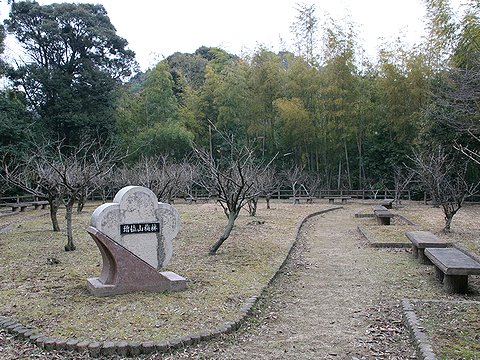 随願寺の増位山梅林 / 姫路市