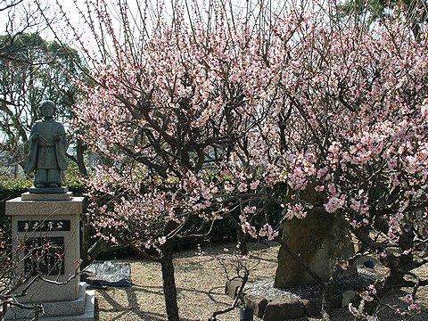 綱敷天満宮の梅の花