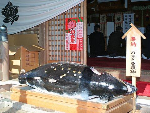岩屋神社のえびす祭に奉納された招福マグロ・明石のえべっさん