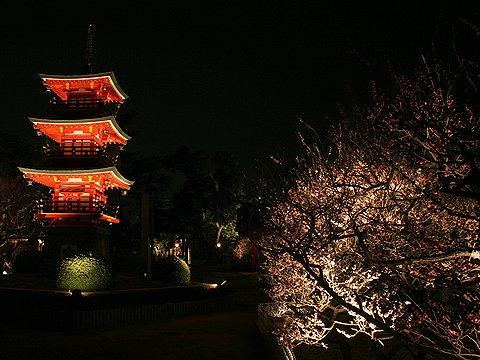 梅の花のライトアップ/綱敷天満宮