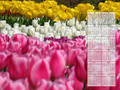 チューリップの花 / 2006年春の花 無料壁紙写真カレンダー