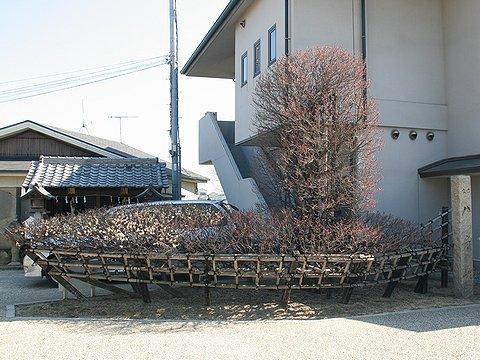 人丸山 柿本神社(人丸神社)・帆掛け船に形作られた八房の梅