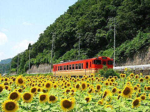 南光町のひまわり畑とJR姫新線