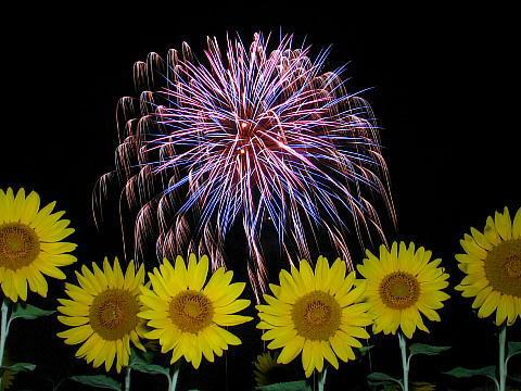 南光町ひまわり祭り花火大会