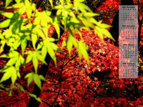 紅葉壁紙カレンダー/2007年11月~2008年2月