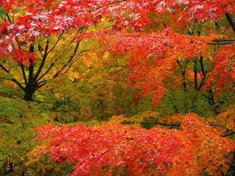 紅葉の壁紙・XGAデスクトップ壁紙写真