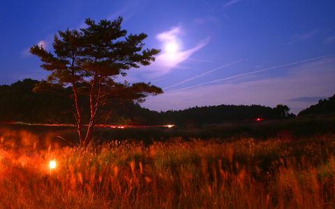 中秋の名月とススキ