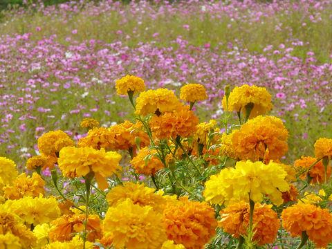 デスクトップ壁紙・花の写真画像