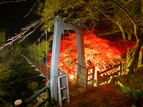 紅葉のライトアップ・川の夜景