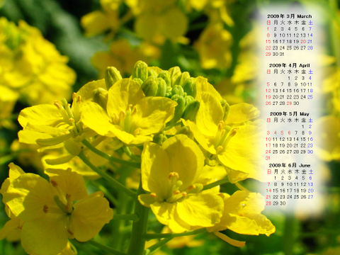 Calendar_200903_004