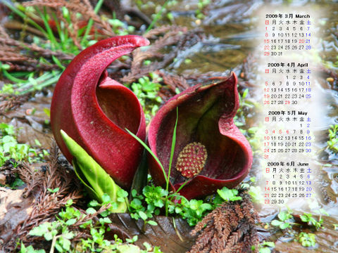 Calendar_200903_006