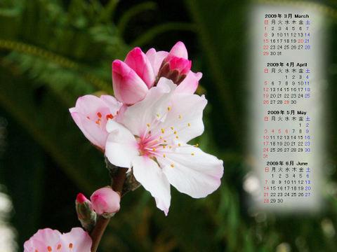Calendar_200903_009