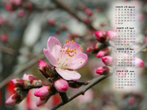 Calendar_200903_010