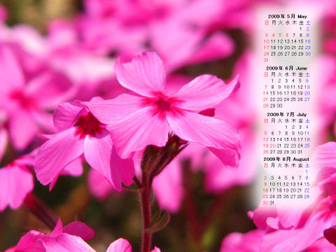 Calendar_200905_014