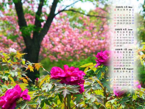 Calendar_200905_015
