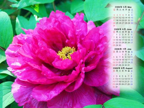 Calendar_200905_016