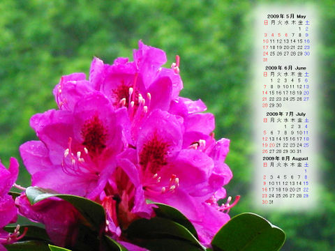 Calendar_200905_018