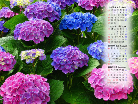 Calendar_200906_005