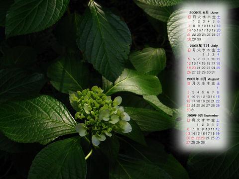 Calendar_200906_009