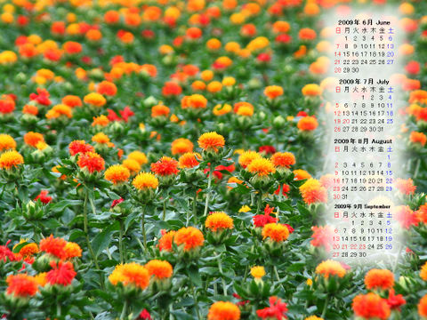 Calendar_200906_018