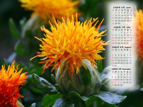 Calendar_200906_019