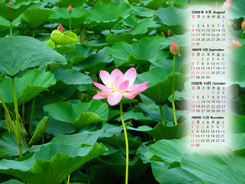 Calendar_200908_005