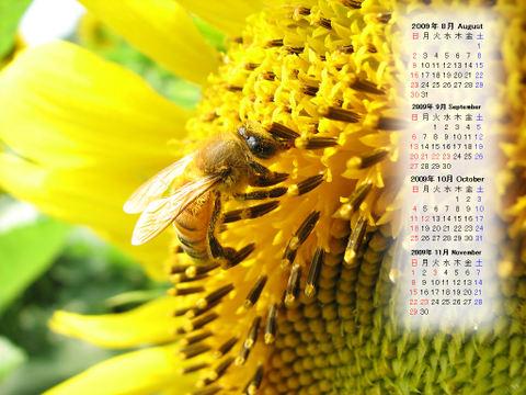 Calendar_200908_012