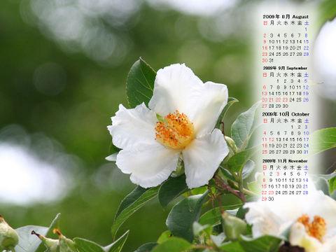 Calendar_200908_015