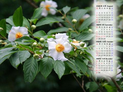 Calendar_200908_016
