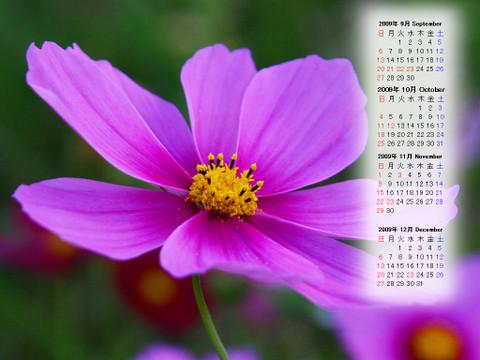 Calendar_200909_004