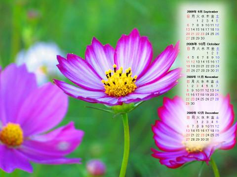 Calendar_200909_005