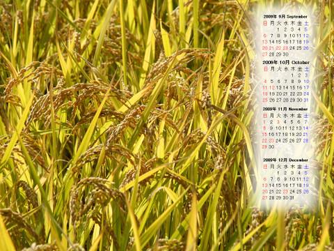 Calendar_200909_013