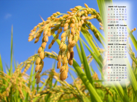 Calendar_200909_014