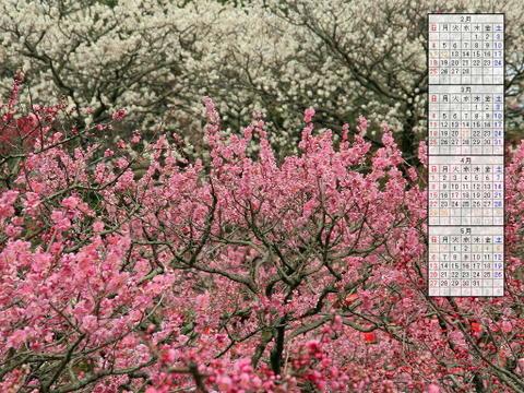 壁紙・梅の花と梅林/2007年無料壁紙カレンダー/2007年2月~2007年5月