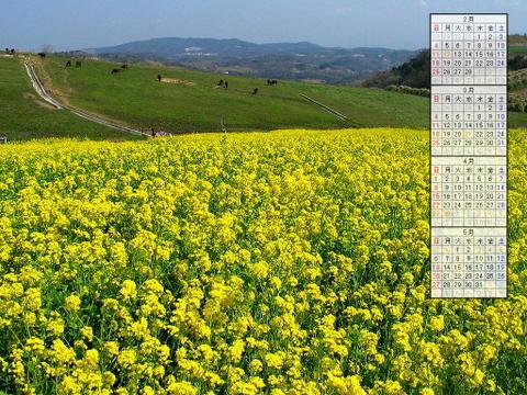 壁紙・菜の花/2007年無料壁紙カレンダー/2007年2月~2007年5月