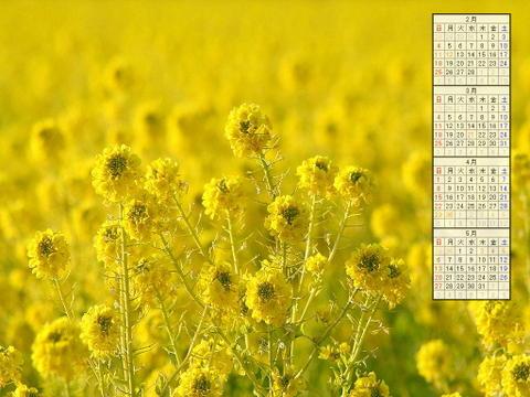 壁紙・菜の花畑/2007年無料壁紙カレンダー/2007年2月~2007年5月