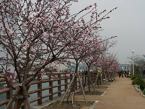 アーモンド並木/水辺の遊歩道・うおざき/神戸市東灘区