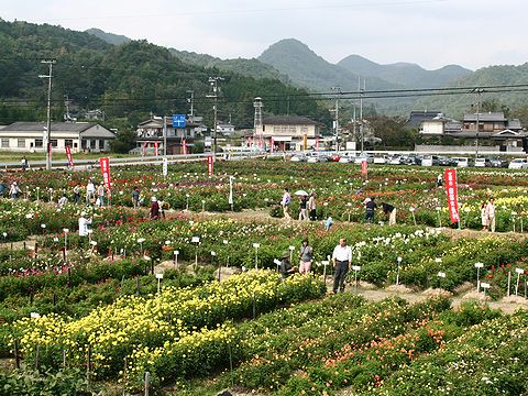 ダリア花つみ園・宝塚市立自然休養村/宝塚市上佐曽利