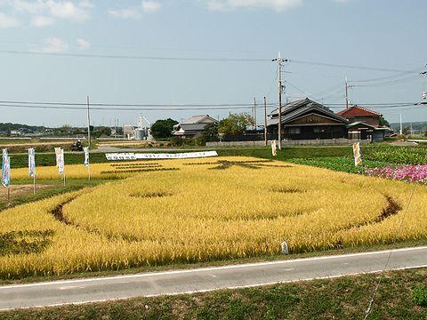 赤米,黒米の古代米で田んぼに描かれたはばタン/三木市志染町窟屋