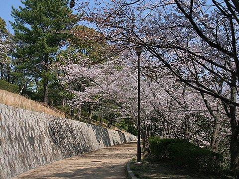 会下山公園の桜/神戸市の桜