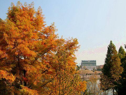 播磨中央公園の紅葉/加東市